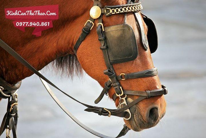 tấm che mắt giúp ngựa tập trung hơn